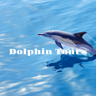 Dolphin Boat Tours in Orange Beach and Gulf Shores